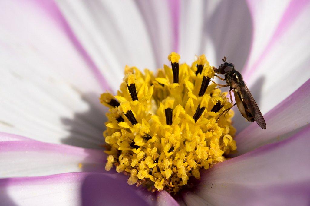 last pollen
