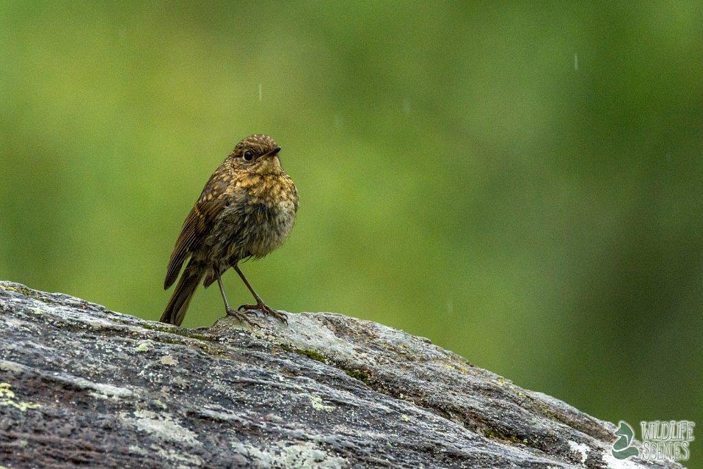 young sittin in the rain