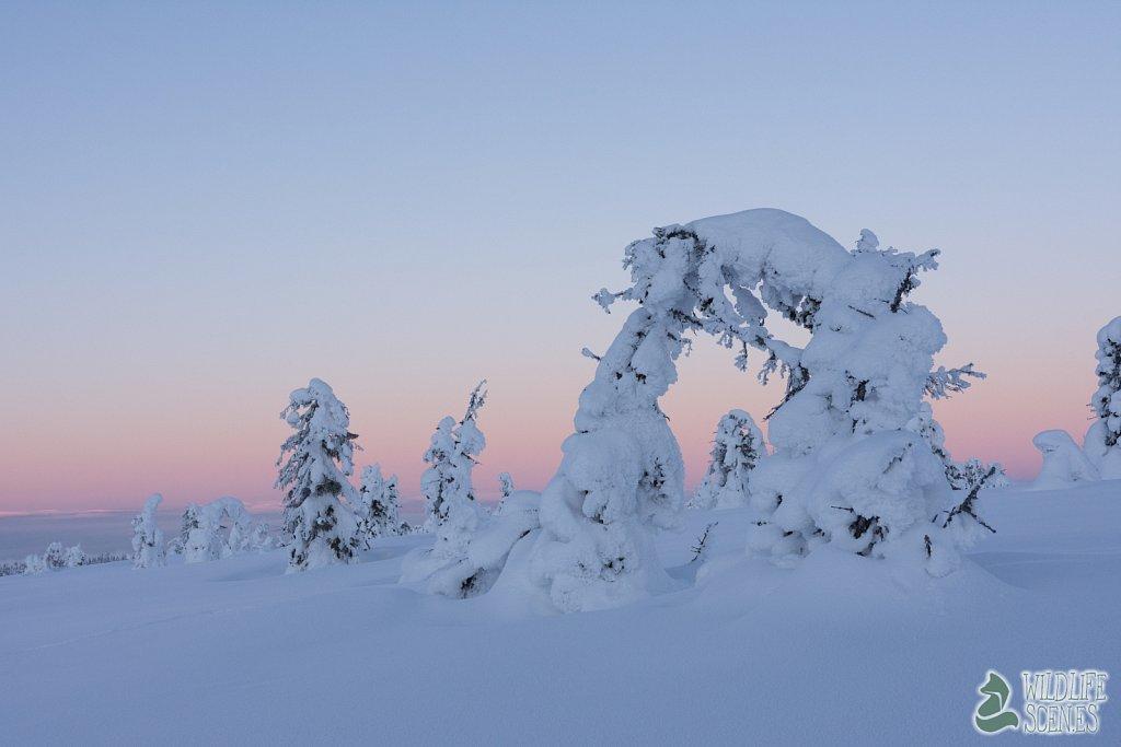 snow scultures