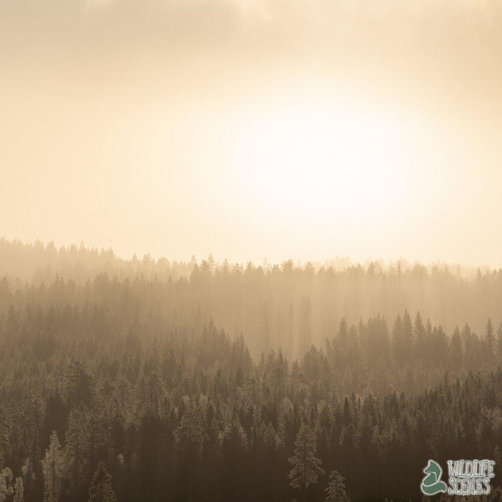 sun breach